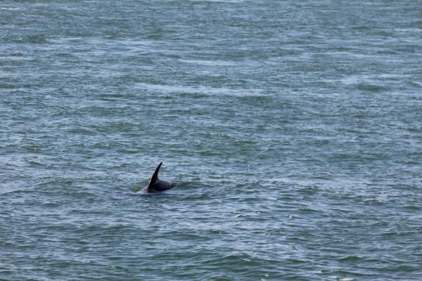 Dolphin Watching Boat Trip - 13 May 2018 (Photo supplied by Joe O'Dea)